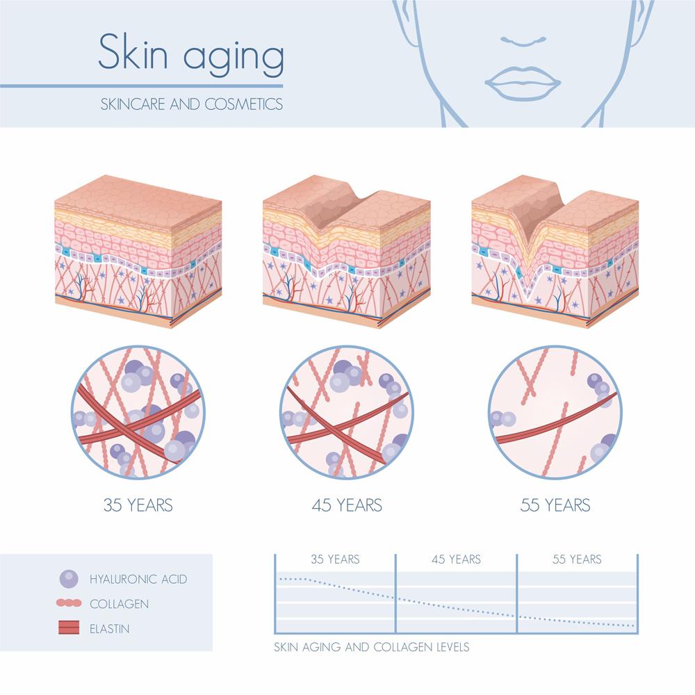 A bőr öregedési folyamata